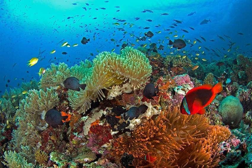 Дайвинг на Филиппинских островах